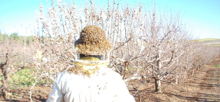 """""""…A land flowing with milk and honey"""" – The verses from Exodus come alive at Negohot Bee Farm"""